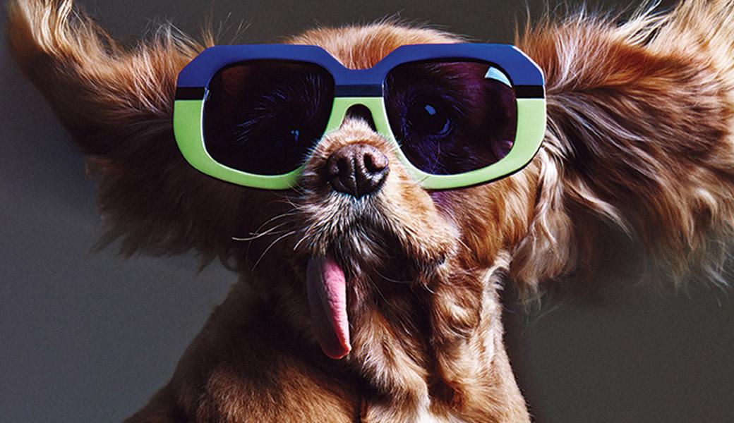 Toast-the-Dog-Karen-Walker