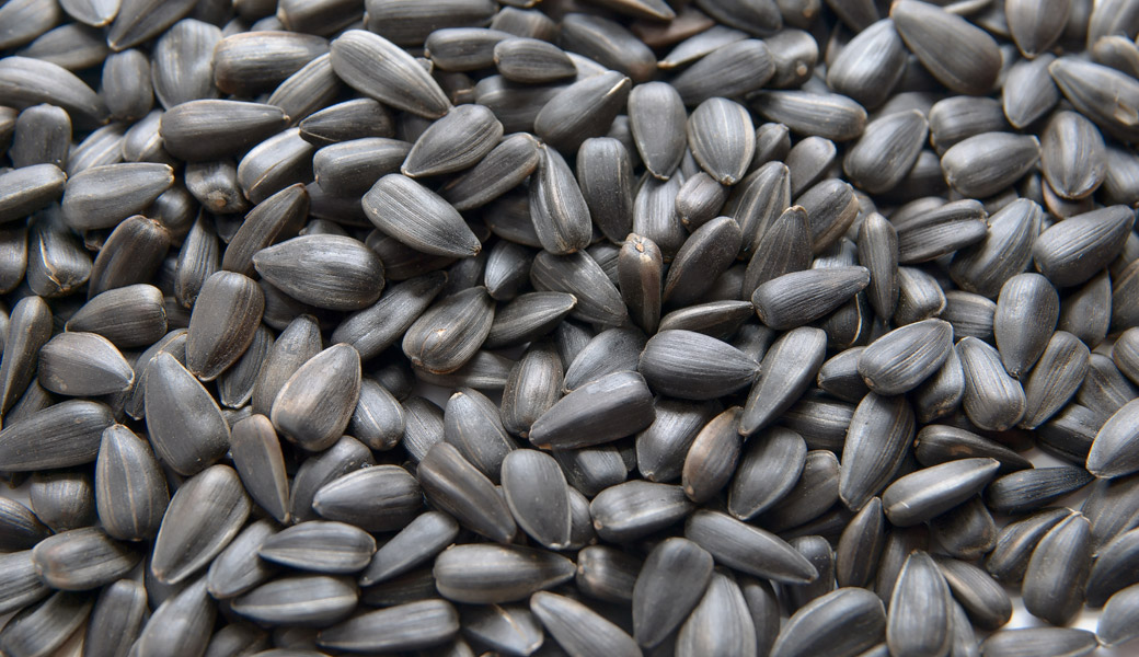 Sunflower-Seeds-Lots