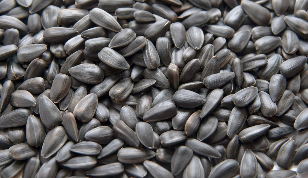 Sunflower-Seeds-Lots
