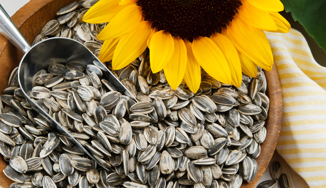 Sunflower-Seeds-Scoop