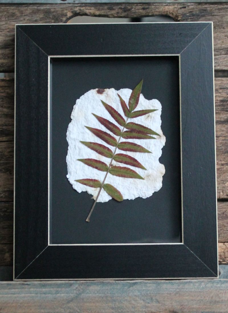framed-leaves-clean-cut-frame-5X7-e1415973858215