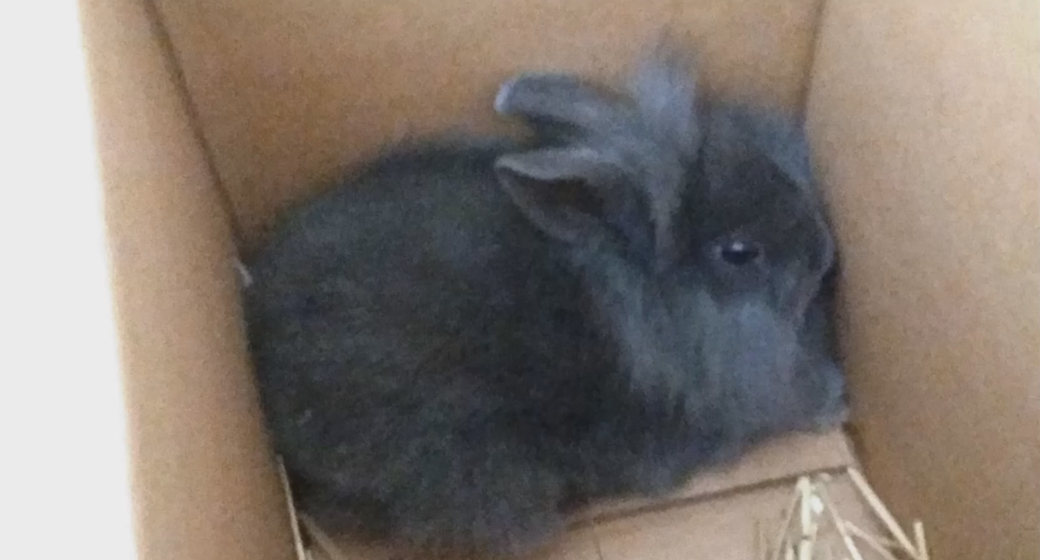 Rabbit-Grey-Danish-Radio-Dj