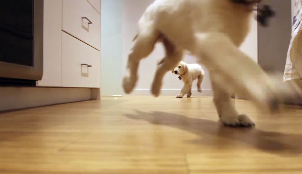 Puppies-running
