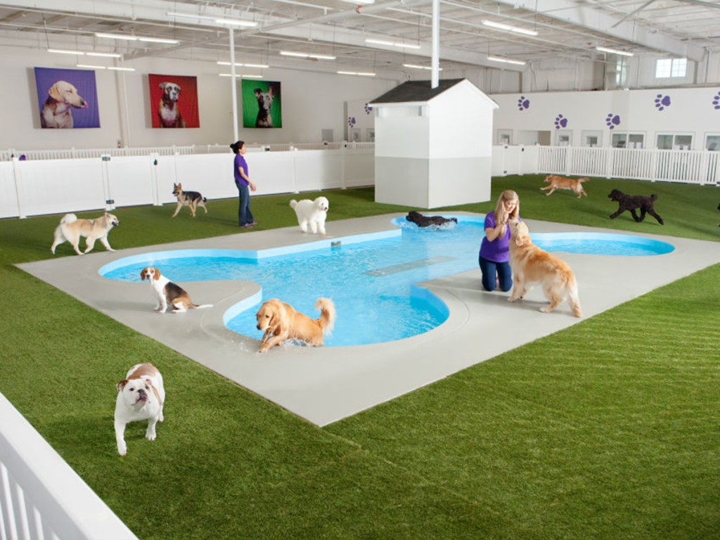 11.-Dog-play-area-1024x768