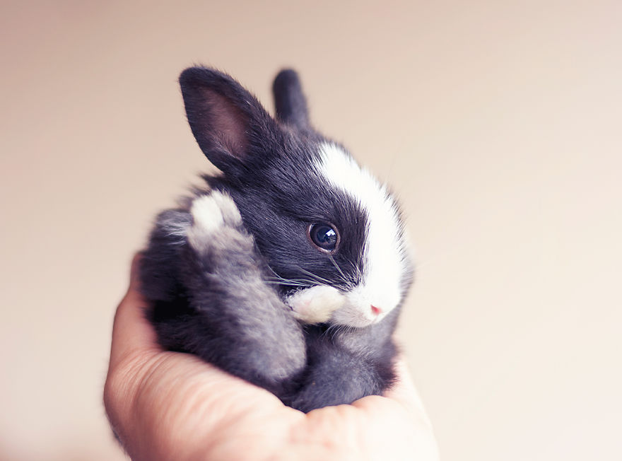 I-Photographed-and-documented-my-baby-bunnies-growing-up12__880