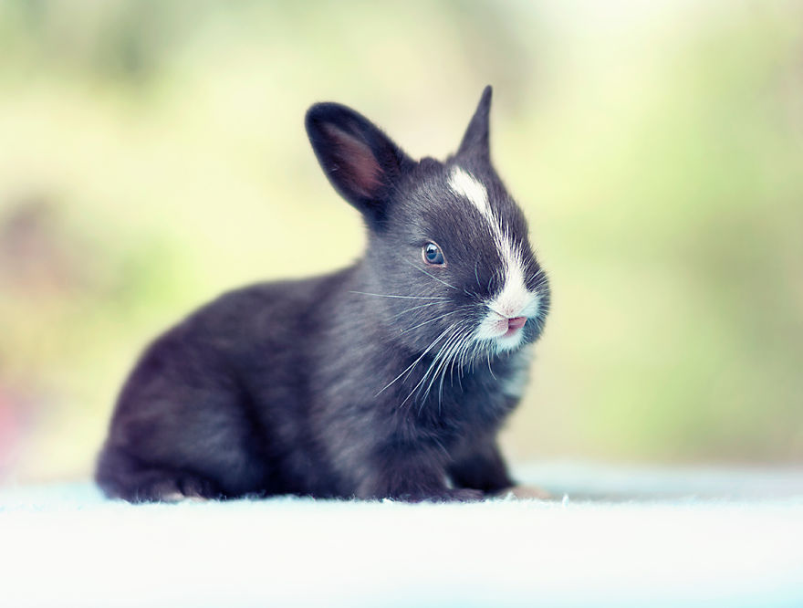 I-Photographed-and-documented-my-baby-bunnies-growing-up7__880