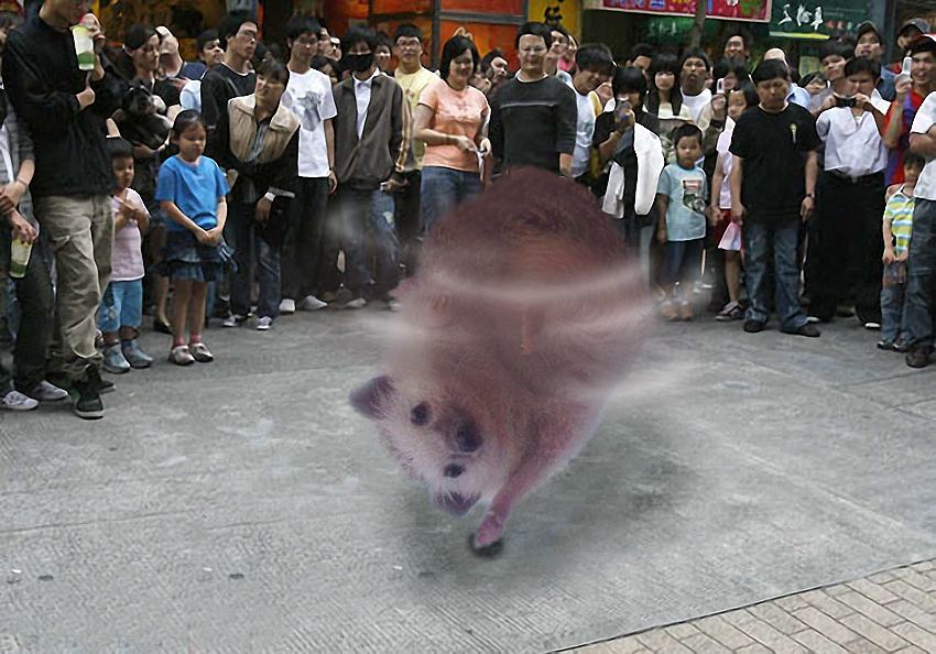 Cute Triumphant hedgehog photoshop (12)