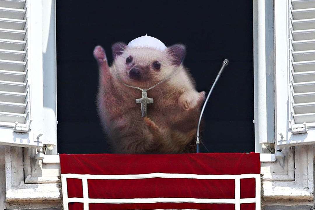 Cute Triumphant hedgehog photoshop (3)