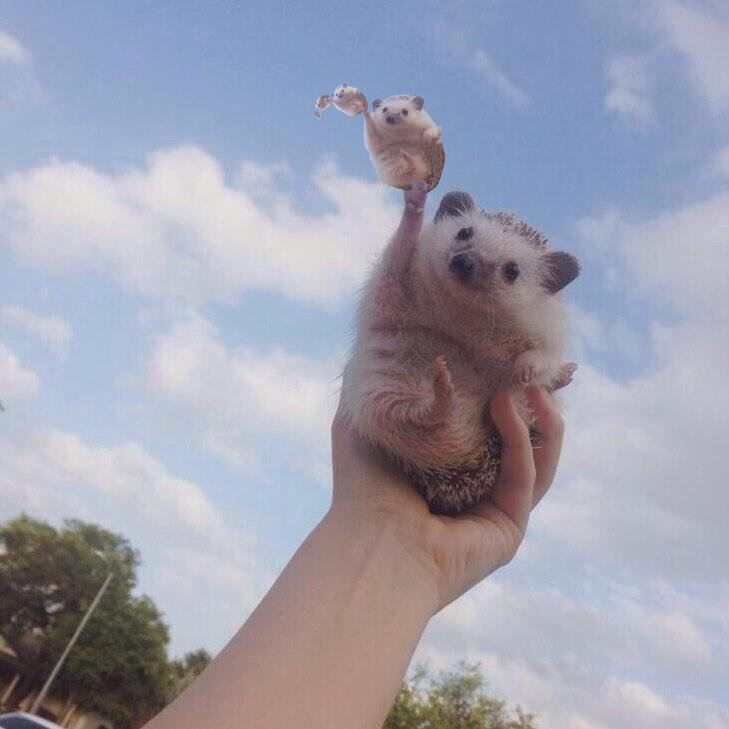 Cute Triumphant hedgehog photoshop (5)