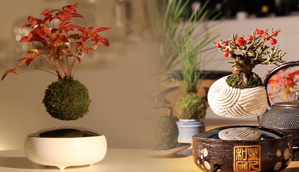 Air-bonsai-tree