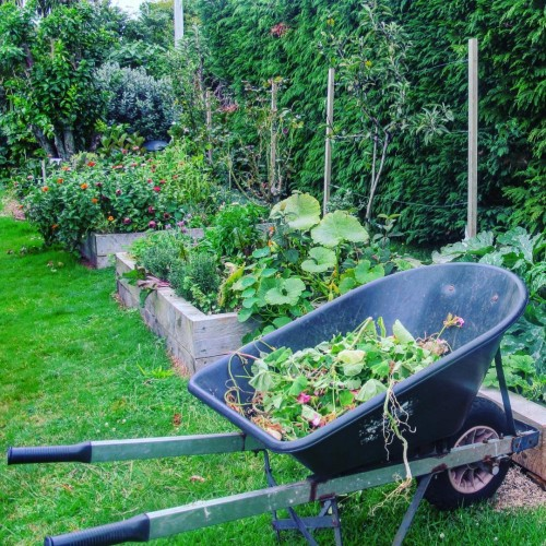 Garden - elible flora and produce