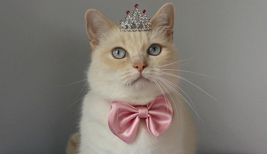 catsprincess-m2woman