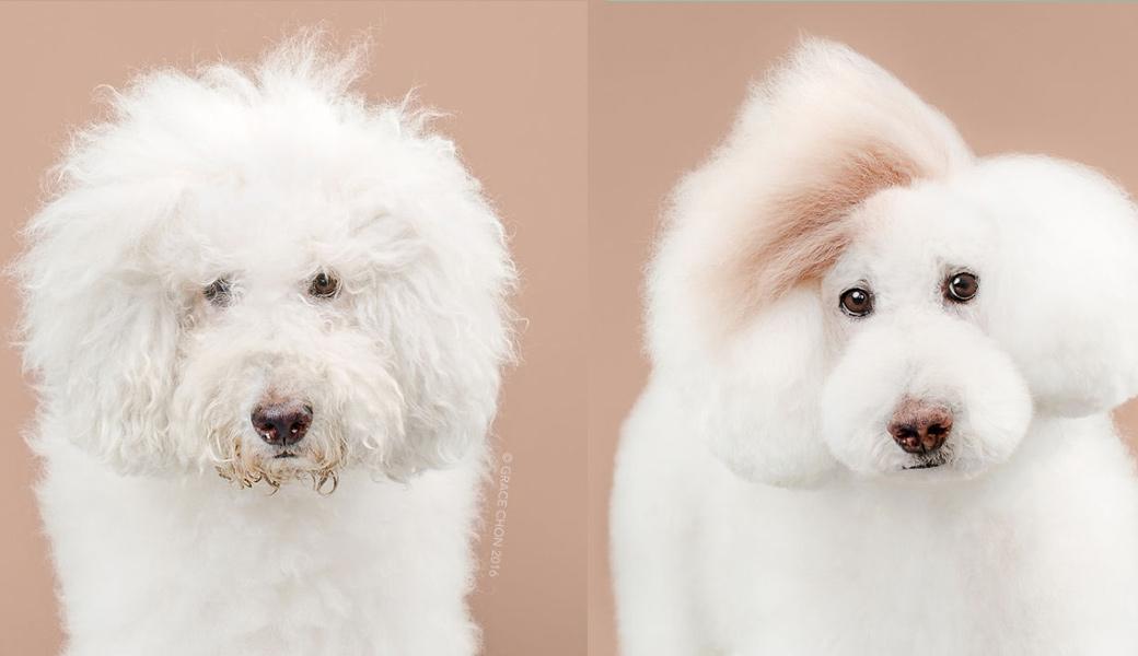 Athena-dog-after-haircut