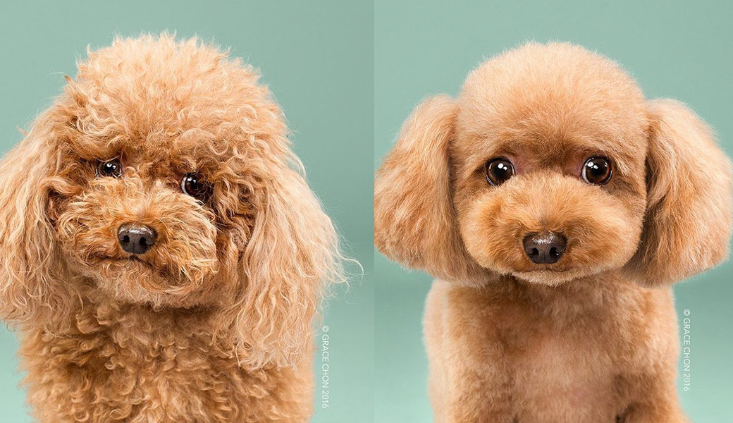 Fluffy-dog-before-after-haircut