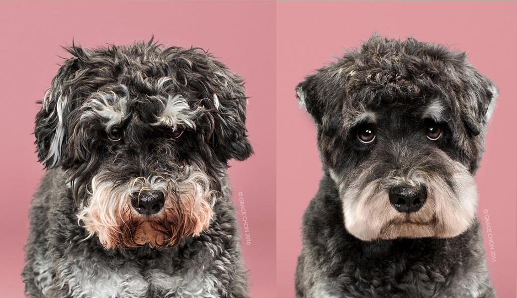Raider-Dog-After-Haircut