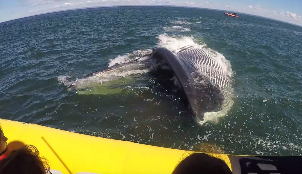 Whale-Goes-under-boat