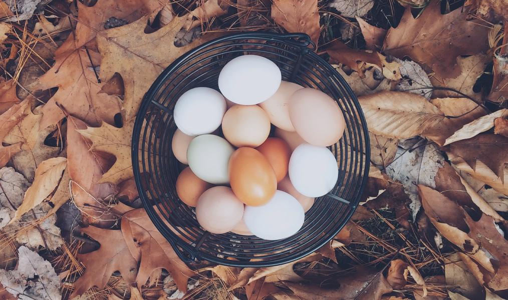 eggs-poisoning