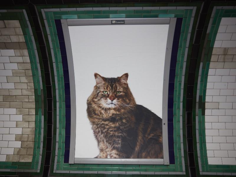 cat-ads-underground-subway-metro-london-3