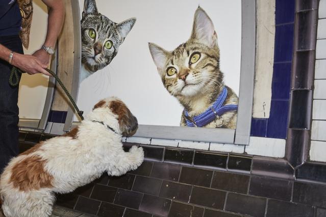 cat-ads-underground-subway-metro-london-5