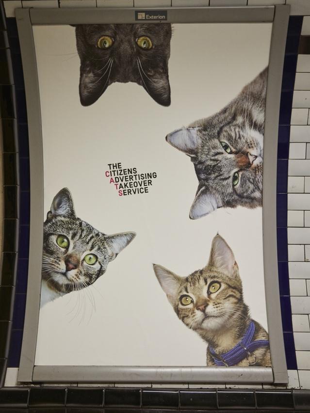cat-ads-underground-subway-metro-london-7