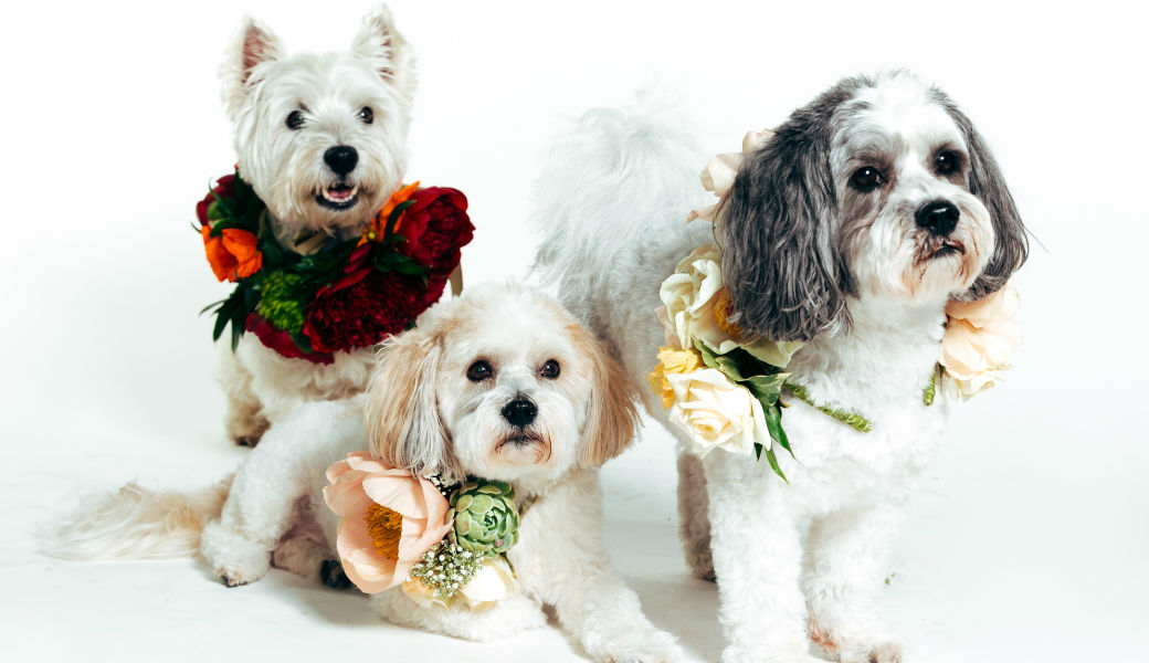 nz-flowers-week-pups-and-peonies-m2woman