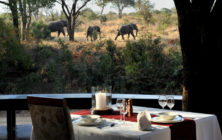 WIne-and-dine-with-elephants