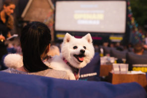Soon You'll Be Able To Take Your Dog On A Date To An Open-Air Cinema