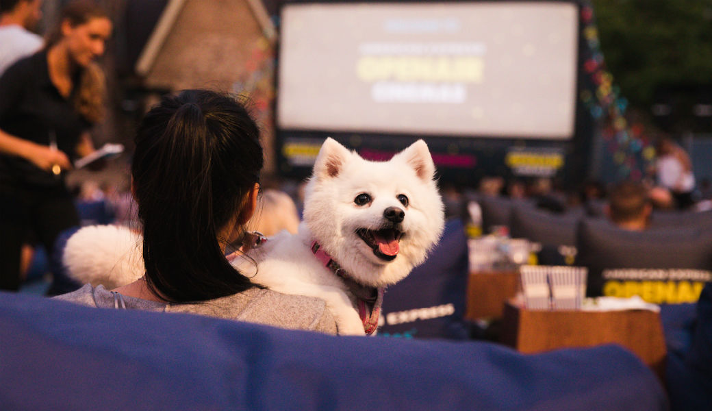 Open-air cinema dog movie date M2Woman