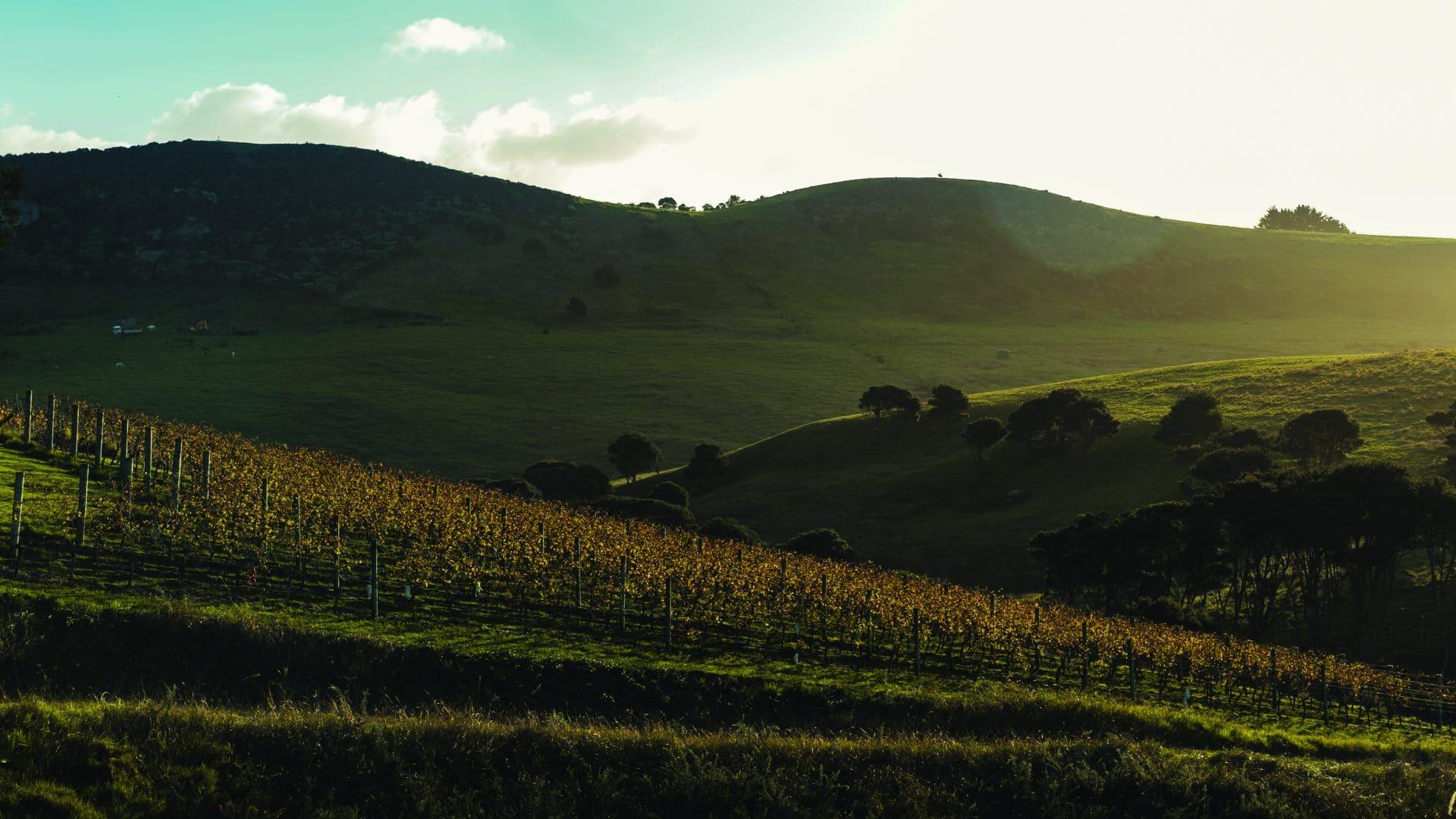 Te Moto vineyard image (1)
